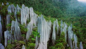 Pinnacles at Mulu, Gunung Mulu National Park, Borneo