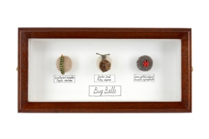 Bug Balls x 3 Collection (Courtesy of C. Moynihan)